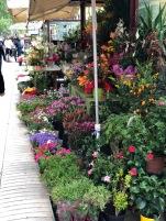 Bright flores brighten Las Ramblas