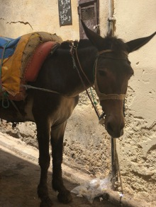 Donkeys are the way to travel in the Medina