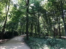 Tiergarten- the Forrest in the middle of the city