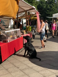 The dog and the sausage stall